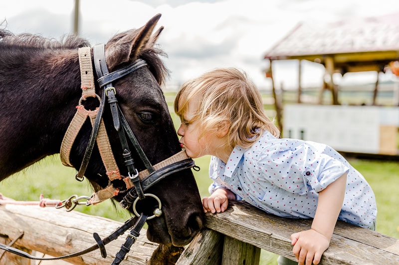 sedinta foto de familie cu cai